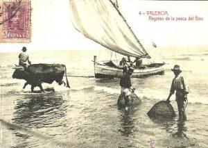 Pesca del Bou. Valencia
