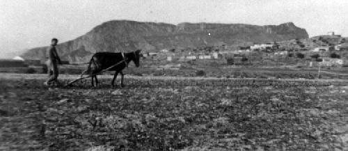 Labrador calpino arando Años 60